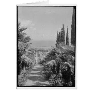 Haifa - del monte Carmelo, CA 1920 Tarjeta De Felicitación