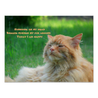 Haiku feliz del gato de la brisa de la sol póster
