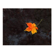 autumn, leaf, water, ripple, rocks, Postcard with custom graphic design