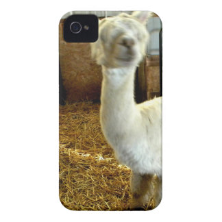Haircute iPhone 4 Cases