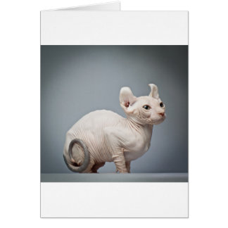 HAIRLESS CAT CARD