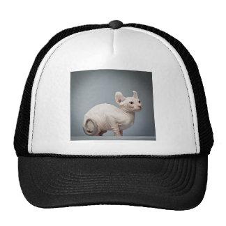 HAIRLESS CAT TRUCKER HATS