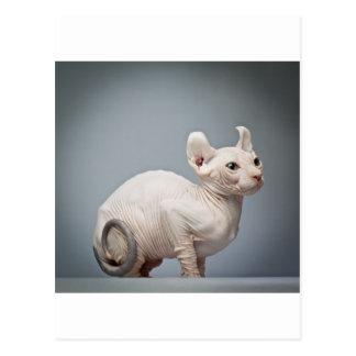 HAIRLESS CAT POSTCARD