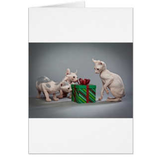 HAIRLESS CAT'S CHRISTMAS CARDS