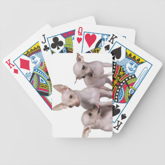 Hairless Chihuahua (5 and 7 months old) Bicycle Playing Cards