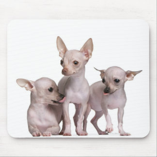 Hairless Chihuahua (5 and 7 months old) Mouse Pad