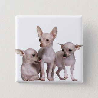 Hairless Chihuahua (5 and 7 months old) Pinback Button