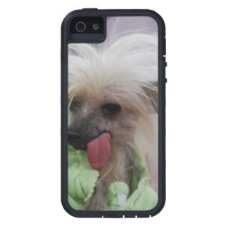 Hairless Chinese Crested Dog iPhone 5 Cover
