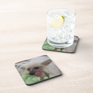 Hairless Chinese Crested Dog Drink Coasters