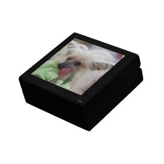 Hairless Chinese Crested Dog Gift Box