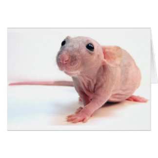 Hairless Rat Greeting Card