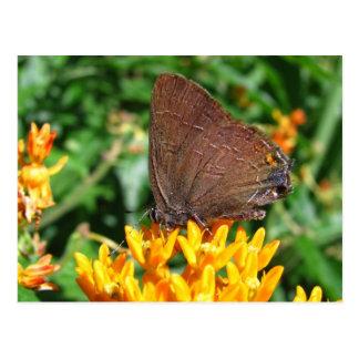 Hairstreak butterfly ~ postcard