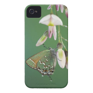 Hairstreak del enebro, gryneus de Callophrys, iPhone 4 Cárcasa