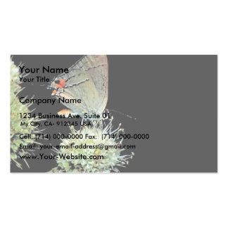 Hairstreak gris en Serpiente de cascabel-amo Plantilla De Tarjeta Personal