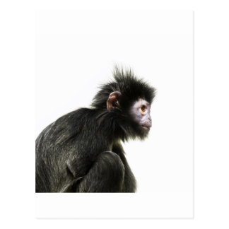 Hairy Baby Monkey Postcard