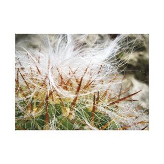 Hairy Cactus Canvas Print