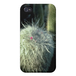 Hairy Cactus With Small Red Flower flowers Covers For iPhone 4