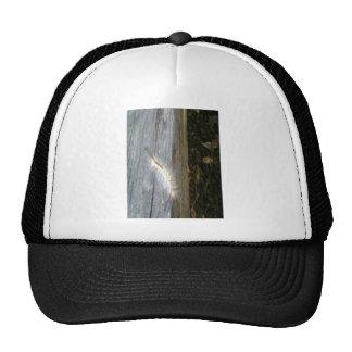 Hairy Caterpillar 2 Hat