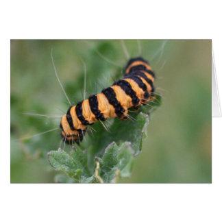 hairy caterpillar card