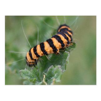 hairy caterpillar postcard