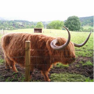 Hairy Cow Photo Cutout