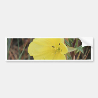 Hairy Evening Primrose Blossom Bumper Sticker