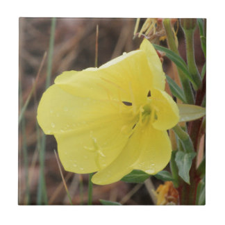 Hairy Evening Primrose Blossom Ceramic Tile
