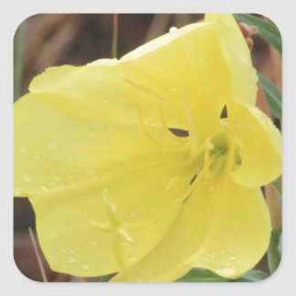 Hairy Evening Primrose Blossom Square Sticker