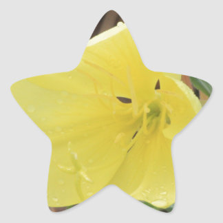 Hairy Evening Primrose Blossom Star Sticker