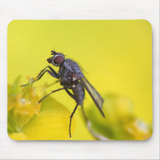Hairy Fly Mouse Mat