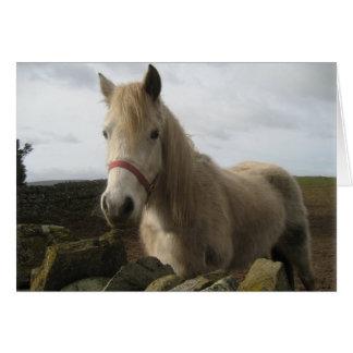 Hairy Horse Card