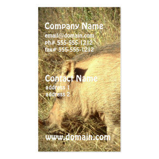 Hairy Warthog Business Cards