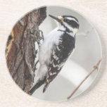 Hairy Woodpecker Beverage Coasters