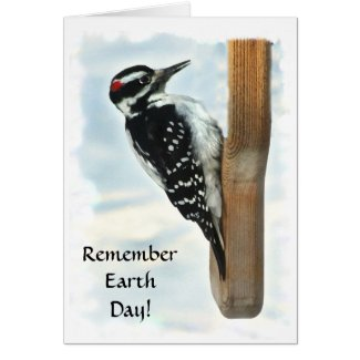 Hairy Woodpecker Earth Day Card