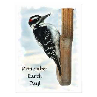 Hairy Woodpecker Earth Day Postcard