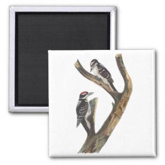 Hairy Woodpecker, John Audubon 2 Inch Square Magnet