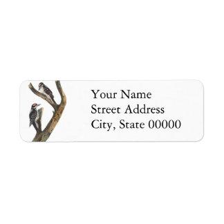 Hairy Woodpecker, John Audubon Label