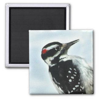 Hairy Woodpecker Magnet