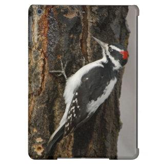 Hairy Woodpecker male on aspen tree, Grand Teton Case For iPad Air