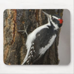 Hairy Woodpecker male on aspen tree, Grand Teton Mouse Pad