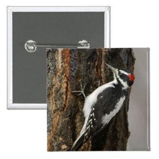Hairy Woodpecker male on aspen tree, Grand Teton Pinback Button