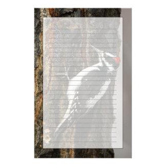 Hairy Woodpecker male on aspen tree, Grand Teton Stationery