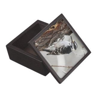 Hairy Woodpecker Premium Keepsake Box