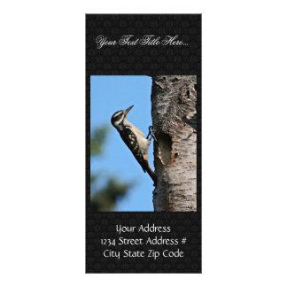 Hairy Woodpecker Rack Card