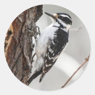Hairy Woodpecker Round Stickers
