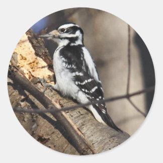 Hairy Woodpecker Stickers