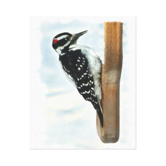 Hairy Woodpecker Wrapped Canvas Print