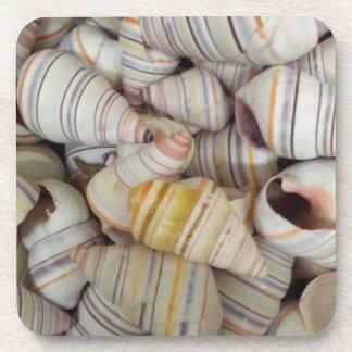 Haitian Tree Snail Shells Coaster