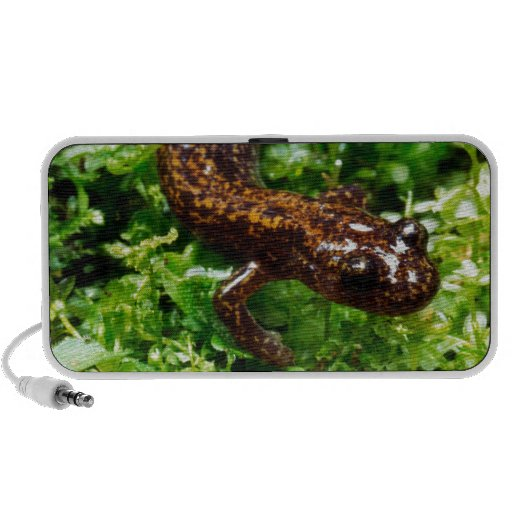 Hakone salamander travelling speakers