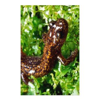 Hakone salamander stationery